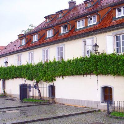 Масштабы поражают!впечатления путешествия туризм словения Марибор вино tourism travel Slovenia Maribor old wine