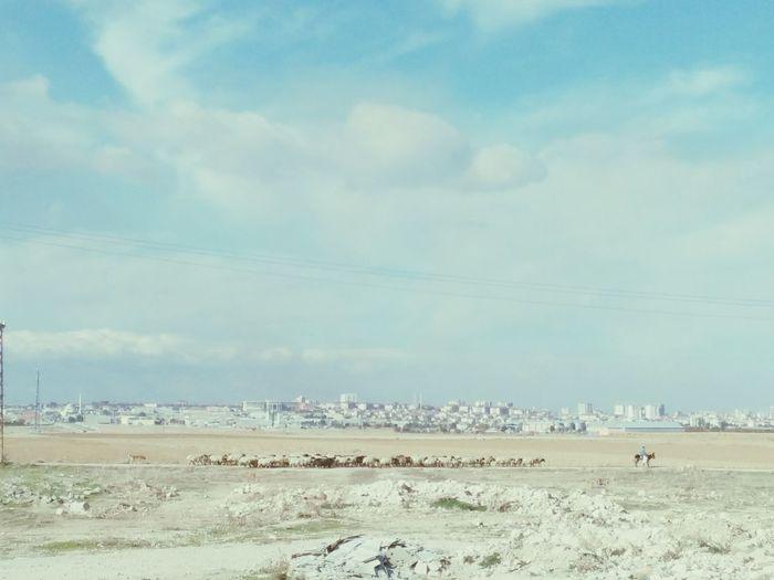 Karaman Koyun Karamaninkoyunu Dogadan Açikhava Köyde Hayatinrenkleri Hayattankare Hayvanlar