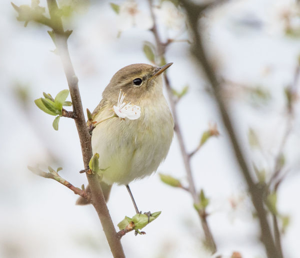 Animal Animal Themes Animal Wildlife Animals In The Wild Bird Branch Close-up Day Focus On Foreground Low Angle View Nature No People One Animal Outdoors Perching Plant Selective Focus Tree Twig Vertebrate