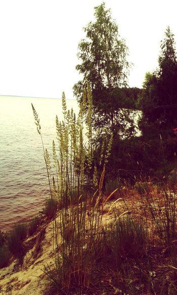 Sukholuch'ye Forest Coast Herb Trees Kiev Sea Lake Lake View Reservoir Ukraine