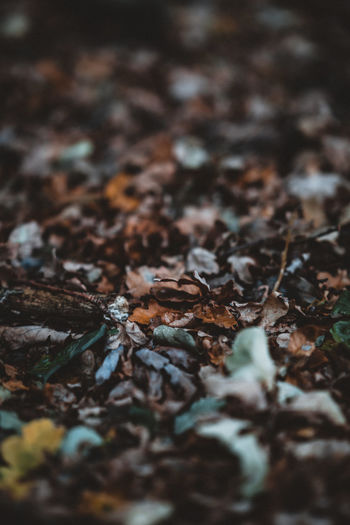 Autumnal Leaves Selective Focus Leaf Plant Part No People Dry Nature Autumn Close-up Day Beauty In Nature Land Field Leaves Change Falling Brown Vulnerability  Fragility Outdoors Full Frame Surface Level Dried