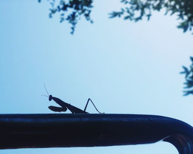 Low angle view of insect against sky