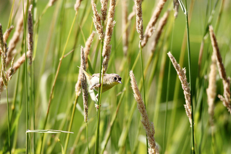 View of a bird on a field