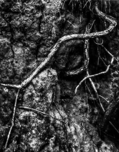 Raizes My Roots Roots Textures And Surfaces Tadaa Community Eye4photography  Blackandwhite Photography Blackandwhite Exploring New Ground EyeEm Nature Lover