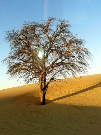 Amazing. Check This Out Hello World Beautiful Nature Clear Blue Sky Abu Dhabi 2014 Sand Dunes Desert Tree And Sky Sand Summer