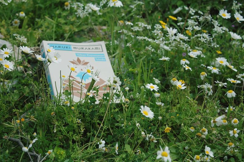 Nature Daisy Flowers Green Book HarukiMurakami Yabankoyunununizinde