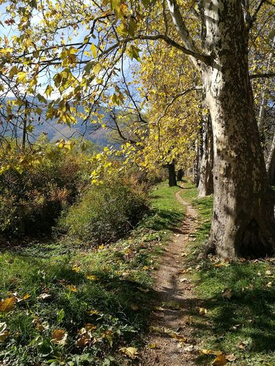 Nature Tree Sunlight No People Outdoors Growth Shadow Beauty In Nature Grass Landscape Autumn Leaves Bbeautiful Path In Nature