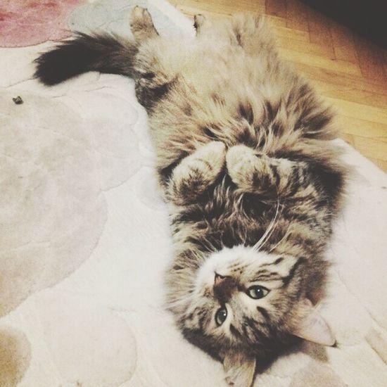 Benimiçinenözeli Endegerlim 😻😻 Pisicik ♡ 🐈🐈 Mrrrrr 🐱🐱 Guess Goodeyes 💐💐