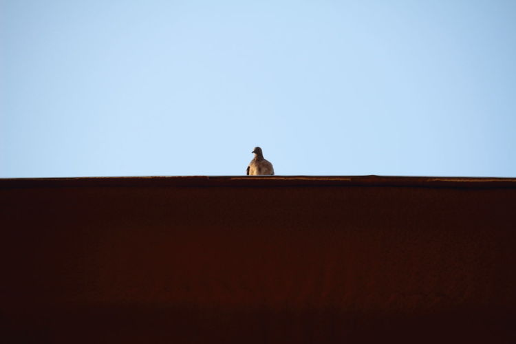 Low angle view of bird relaxing on roof against clear sky