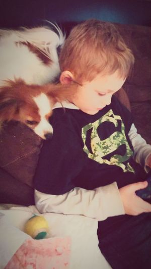 Its A Dogs Life I Love My Dog Mansbestfriend Dogstagram Papillon Hanging Out Kids Being Kids My Dogs Are Cooler Than Your Kids Kids Playing With The Animals Telling Stories Differently Homeiswheretheartis Pet Portraits Connected By Travel