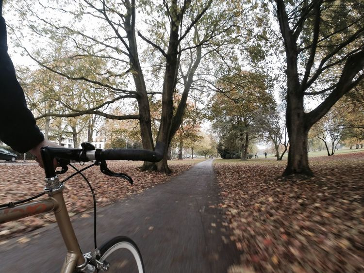 Tree Road Transportation Park Bench Outdoors Bike Bike Ride Bike Tour Bicycle Bicycle Trip Fahrrad Fixie Fixed Fixedgear Fixed Gear Singlespeed SingleSpeed Bike Autumn Alster Hamburg Gopro