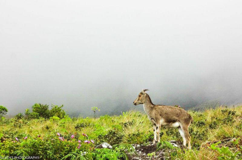Munnar Greenery Hillstation Feel Like Heaven First Eyeem Photo Eyeemphoto