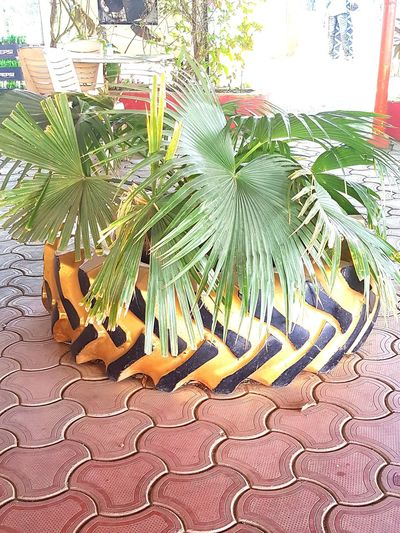 Innovate Reuse Recycle End Plastic Pollution Tree Close-up Plant Leaf Vein Plant Life