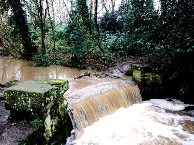 The Arrowe Brook Arrowe Park Arrowe Brook Arrowe Country Park Tree Water Sky Flowing Water Stream - Flowing Water Waterfall Falling Water Moss Splashing River Power In Nature Flowing Stream