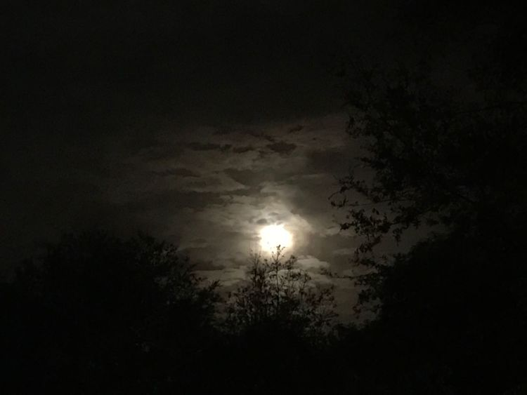 Full Moon Winter Beauty In Nature Sky Outdoors Floridanights