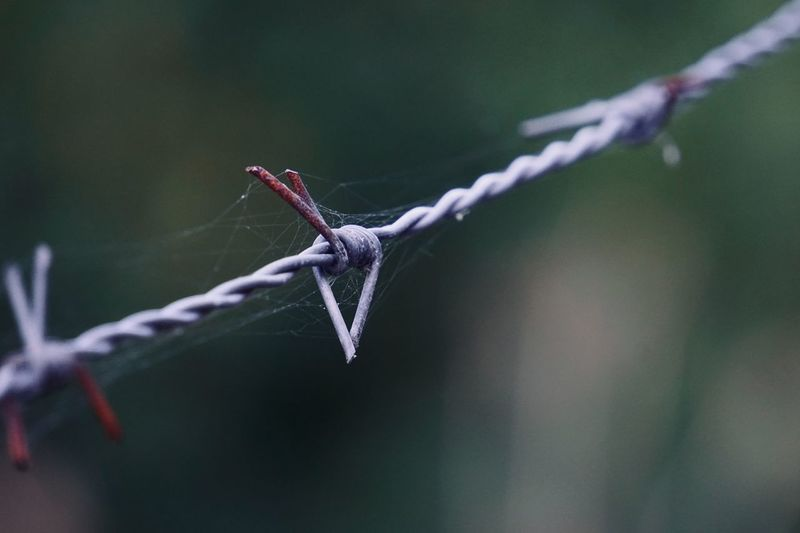 Old metallic barbed wire fence