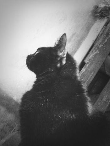 Cat Lovers My Cat Blackandwhite