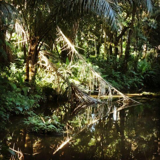 Water Reflections Mirror Riodejaneiro Lake Parquelage