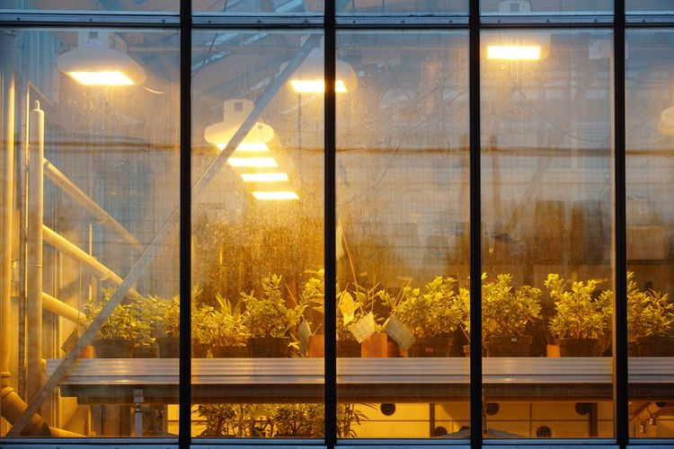 Greenhouse for research Greenhouse Greenhouse Plants Research Ecologic Glass - Material Cactus Palmes Grass Light University Biology Plant Plant Life