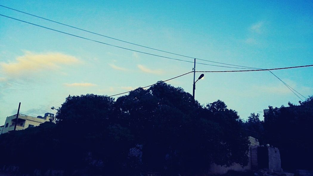 Jordan Tree Traveling Blue First Eyeem Photo Beauty In Nature Nature Tumblr My Favorite Color Nature Day