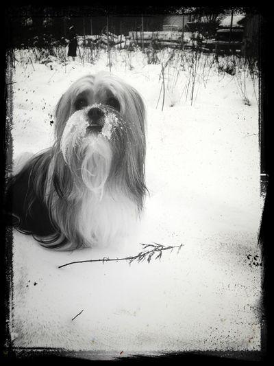 Charlie!! I Love My Dog