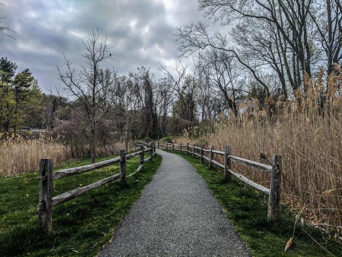 Walkway amidst trees against sky
