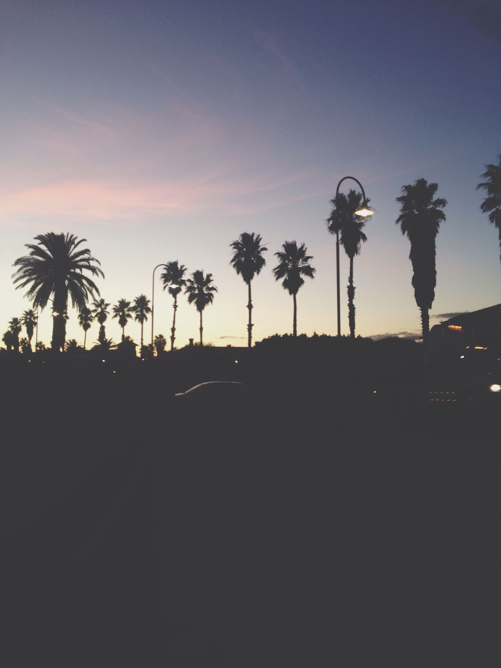 palm tree, tree, silhouette, sunset, sky, growth, street light, nature, tranquility, beauty in nature, tree trunk, tranquil scene, coconut palm tree, scenics, dusk, outdoors, road, no people, clear sky, sunlight
