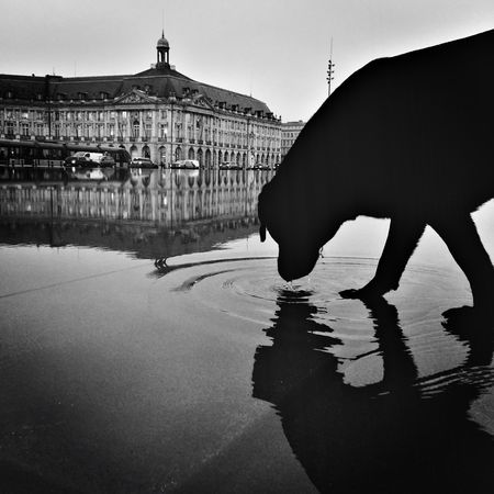 Dog on the water Water Reflection Wet Outdoors No People Embrace Urban Life City View  Bordeaux Bnw Bnw_life Streetphotography Blackandwhite Dog Monochrome Bnwphotography Shadow Silhouette Mirror Reflection