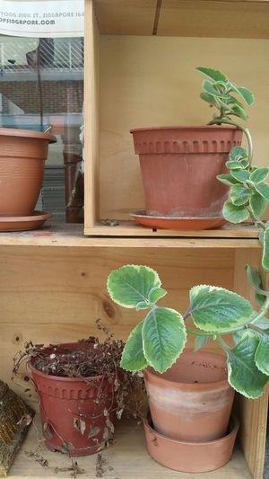 Pots Plants Potted Plants Nature Tiong Bahru Singapore