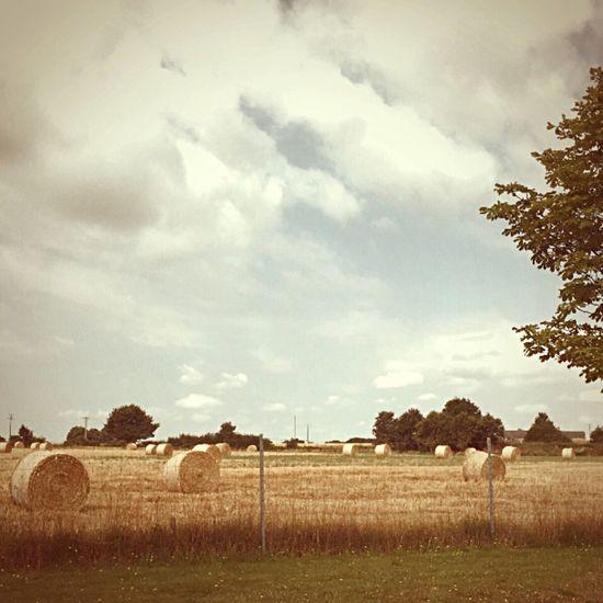 Lo-mob Landscape Landscape_photography Landscape_Collection Farm