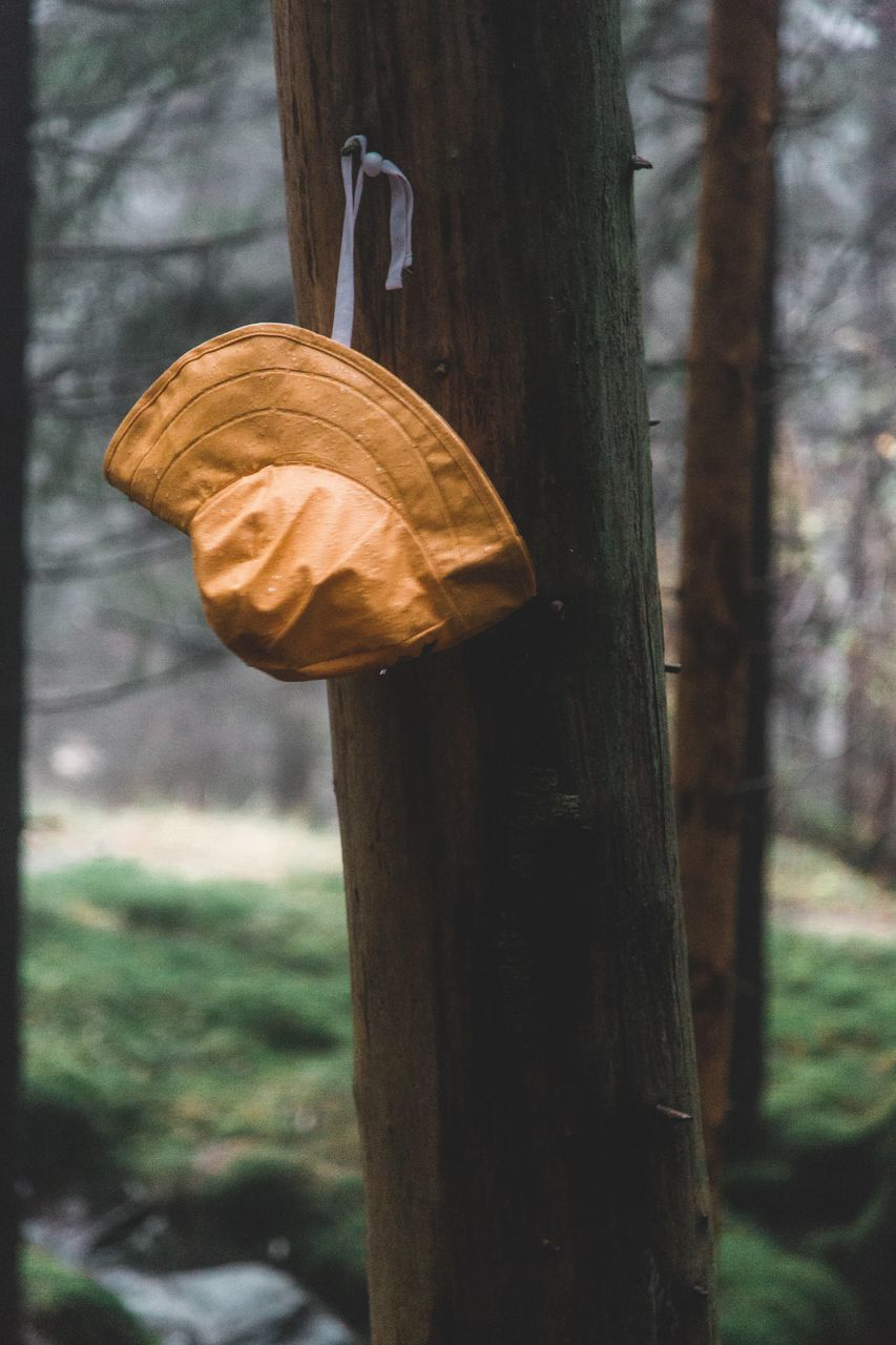 tree, tree trunk, trunk, focus on foreground, plant, no people, wood - material, land, day, close-up, forest, nature, wooden post, outdoors, pole, metal, hanging, animal, post, one animal