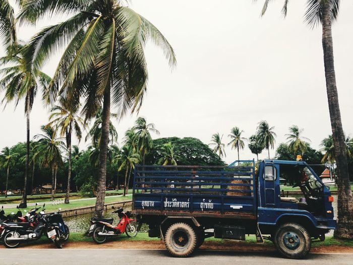 Sukhothai Sukhothaihistoricalpark Coconut Tree Thailand Streetphotography Travelling Vehicle