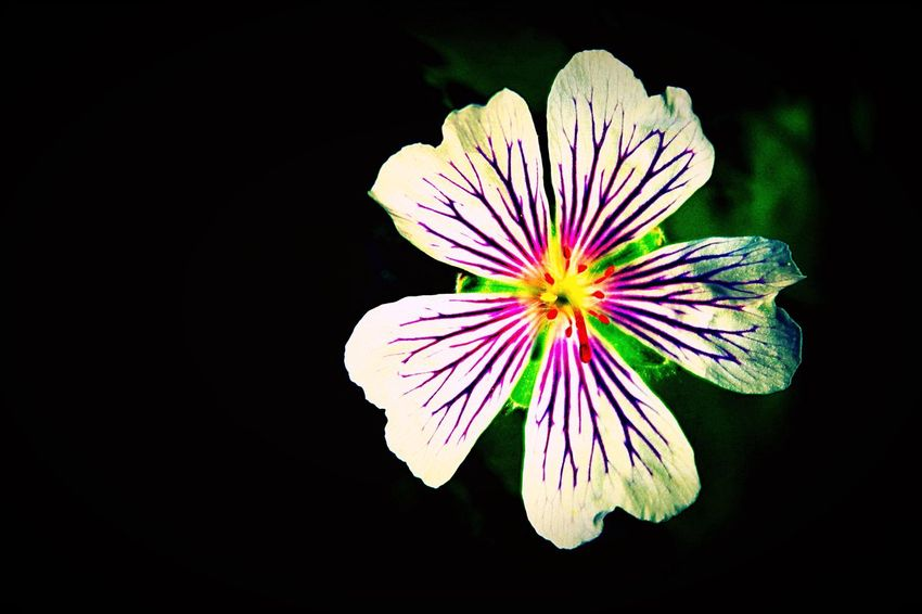 Flower Flowers Flowerporn Flower Photography Floweroftheday Photo Photography Canon Canonphotography Canon_photos Canon_official Canon100D Colors Colorful Color Colours Colourful Colour Purple Purple Flower Purple Flowers Purpleflowers Purpleflower White White Flower First Eyeem Photo