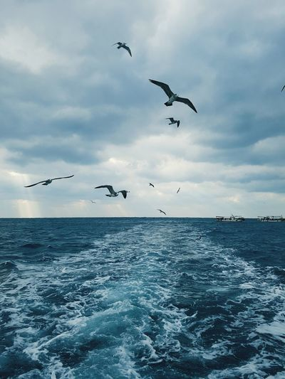 Fishing on the boat Outdoors Beauty In Nature Low Angle View Sky Larus Argentatus Sailing Boat Jeju-island Jeju Travel Cloud - Sky Winter Choppy Sea