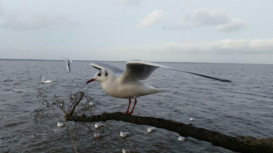 Auf die Plätze fertig loooooooos Steinhude-am-meer.de - Dein Meer-Foto Animals Enjoying Life Nature Lover Water