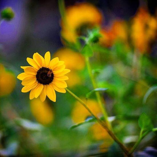 Hello Spring Photography Indiaphotography India Nature Flower Nikon Nikonphotography D7200 Iamnikon Iamexclusive