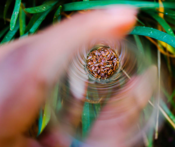 Close-up of seeds in a tube ready for planting