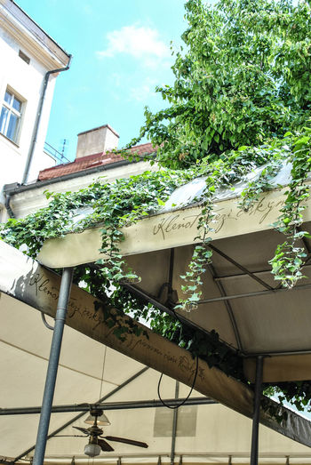 Innenhof Pavilion Summer Hinterhofromantik Los Geht's! Lets Go  Backyard The Essence Of Summer