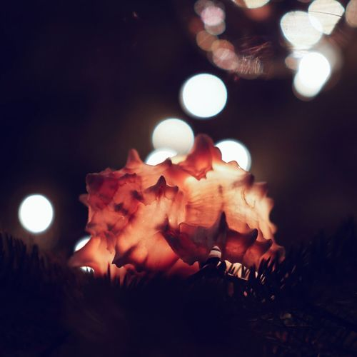 Piece of the ocean within a x-mas tree 🌲🐚 Nature Tree Sea Ocean Xmastree Light Night No People Indoors