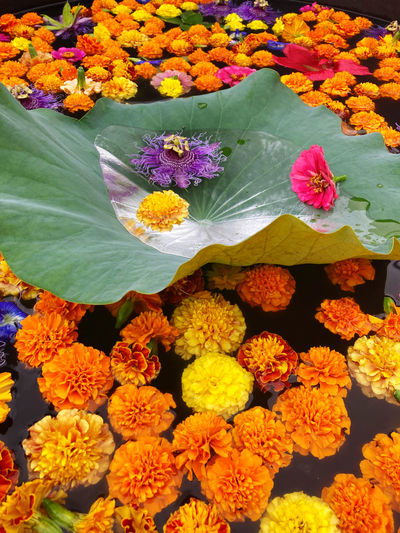 High angle view of multi colored flowers