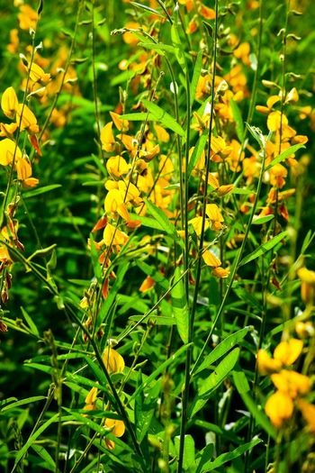 Beauty In Nature Nature Flower Yellow Garden Garden Photography Flowering Plant Leaf Close-up Grass Plant Green Color Animal Themes Leaves Pollination