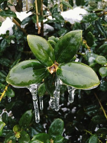 Smart Simplicity Frozen Freezing Rain Green Plants