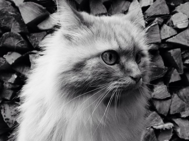 Cat Lover Autumn🍁🍁🍁 Black And White First Eyeem Photo