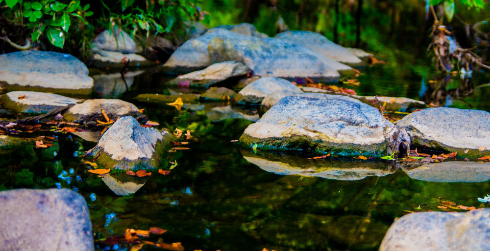 Animal Themes Baltimore Beauty In Nature Close-up Day Floating On Water Freshness Isheratheshooter Leaf Nature No People Outdoors Reflection Tortoise Tranquility Water WoodLand