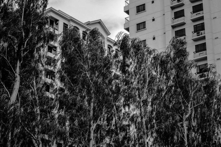 Winded Trees Blackandwhite Blackandwhite Photography Eye4photography  EyeEm Gallery Eyeem Philippines Perspectives Through The Window Trees Urban Urban Exploration Urbanphotography Wind