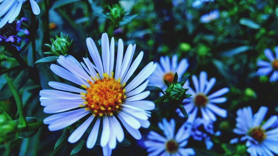 Flowers Summer Finland