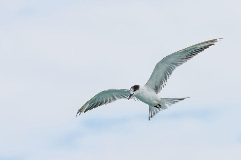 Bird Birds Bird Photography Birds Of EyeEm  Aniamls Animal Animals In The Wild Animals Flying Bird Flying