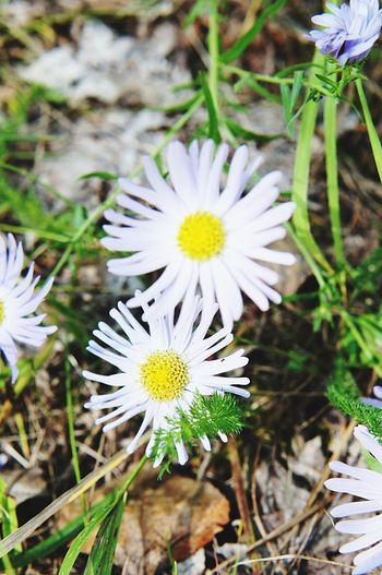цветы Ромашки мои фото учусьфотать Vscocam MyPhotography Likeforlike Nice 10likes Ilovephotography