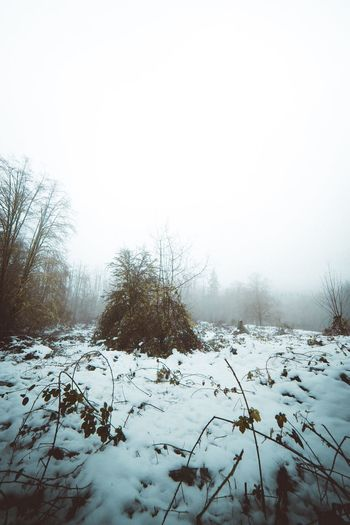 Snow islands? Winter Snow Cold Temperature Weather Nature Tree Beauty In Nature Bare Tree Covering Tranquil Scene Tranquility Scenics Landscape No People Outdoors Field Day Snow Covered Sky Cold