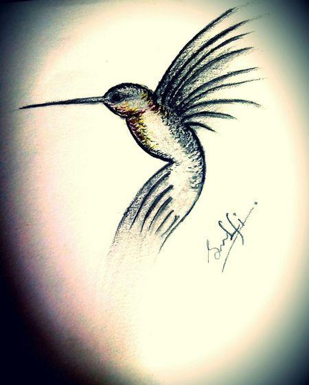 Pencil Drawing Bird